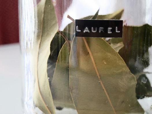 spanish-laurel