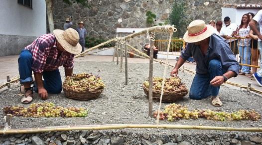 grape harvest el borge