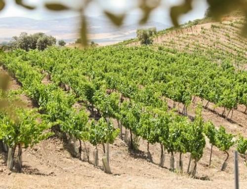 Vinos de Málaga – De las regiones vinícolas más antiguas del mundo